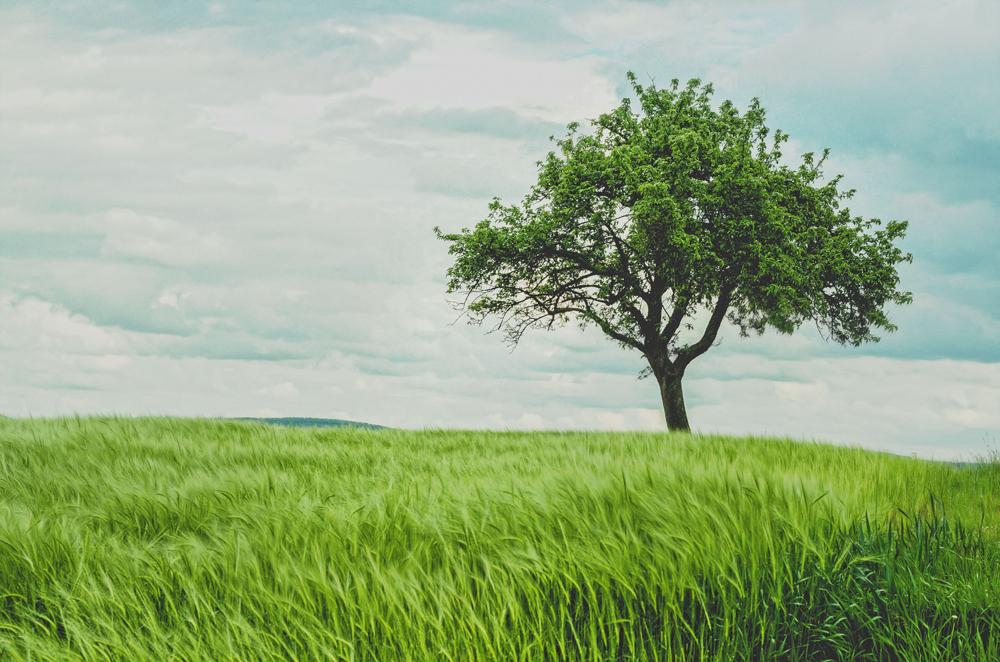 LIDS Fachschale Baumkataster
